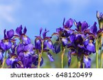 iris flowers on blue sky... | Shutterstock . vector #648120499