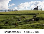 Cows In A Bright Green Field I...