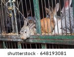caged rabbits ready to... | Shutterstock . vector #648193081