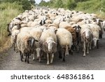 Small photo of Sheeps herd