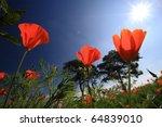 red poppies in sunbeam. | Shutterstock . vector #64839010