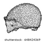hedgehog illustration  drawing  ... | Shutterstock .eps vector #648424369