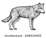 wolf illustration  drawing ... | Shutterstock .eps vector #648424405