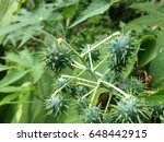 vegetable with spikes ... | Shutterstock . vector #648442915