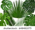 green tropical leaves on white... | Shutterstock . vector #648481075
