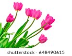 isolated pink tulips on white... | Shutterstock . vector #648490615