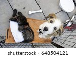 dogs abandoned and rescued ... | Shutterstock . vector #648504121