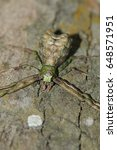 Small photo of Thomisidae in the nature