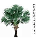 palm tree isolated on white... | Shutterstock . vector #648574021