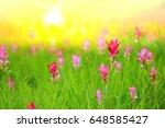 sunrise at siam tulip fields... | Shutterstock . vector #648585427