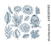 hand drawn plant and flower...   Shutterstock .eps vector #648585985