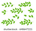 natural set of hand drawn tree... | Shutterstock . vector #648647221