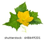 cucumber leaf iwith flower... | Shutterstock . vector #648649201