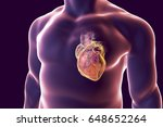 human heart with heart vessles...   Shutterstock . vector #648652264