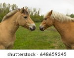 Two Horses  Who Like Each Othe...