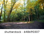 Forest Trees At The Autumn...