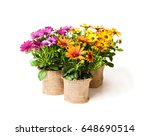beautiful  colorful daisy... | Shutterstock . vector #648690514