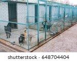 shelter for stray dogs. | Shutterstock . vector #648704404