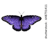 Butterfly Top View Of...