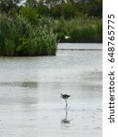 Small photo of Small wader bird in Camargue, France