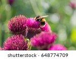 amazing view of bumble bee... | Shutterstock . vector #648774709