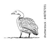 hand drawn vector goose view... | Shutterstock .eps vector #648787351