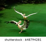 two pelicans flap their wings... | Shutterstock . vector #648794281