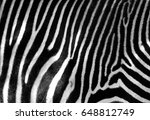 Black And White Zebra Skin Wit...