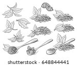 collection of tea leaves. green ... | Shutterstock .eps vector #648844441