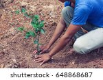 a man planting tree in the...   Shutterstock . vector #648868687
