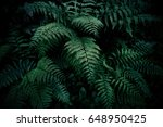 Natural Green Fern In The...
