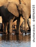 Small photo of The African bush elephant (Loxodonta africana) a herd of elephants with baby drinks from the waterhole
