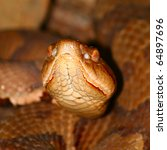 Small photo of A venomous Copperhead (Agkistrodon contortrix) snake at Monte Sano State Park in Alabama