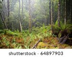 forest details with thick...