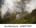 forest details with fog and...