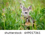 Young Wild Roe Deer In Grass ...