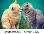 Two Cats Sniffing To Each Other ...