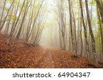 road through autumn woods - stock photo