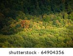 forest at the foot of the mountains - stock photo