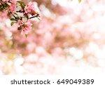 light pink flower composition   Shutterstock . vector #649049389