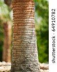 Closeup Photo Of Palm Tree Bar...