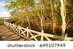 mangrove forest in the...   Shutterstock . vector #649107949