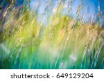 Stock photo beautiful close up ecology nature landscape with meadow abstract grass background 649129204