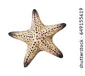 colorful alive starfish  ... | Shutterstock . vector #649155619