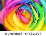 roses mixed colors. | Shutterstock . vector #649211917