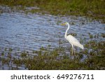 wildlife background of white... | Shutterstock . vector #649276711