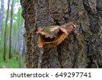 Rotten Orange Polypore Mushroo...