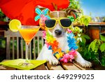jack russell dog relaxing on... | Shutterstock . vector #649299025