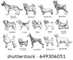 dogs breeds vector set.... | Shutterstock .eps vector #649306051
