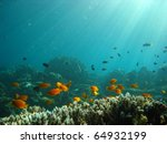 Underwater Light With Fish